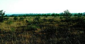 Ibmer Moor © Land OÖ/ Abt. Naturschutz