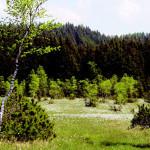 Wasenmoos © W. Kunnert/ Verein Wasenmoos