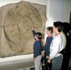 Riesen-Ammonit im Haus der Natur