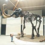 Mammutmuseum Siegsdorf © R. Darga / Gemeinde Siegsdorf
