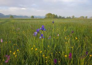 Wenger Moor © Popp-Hackner Photography